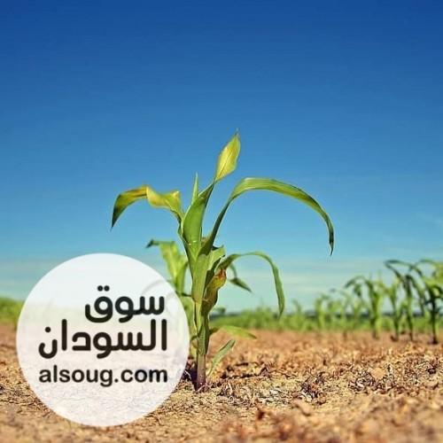اراضي زراعية مشروع الرهد الزراعي - صورة رقم