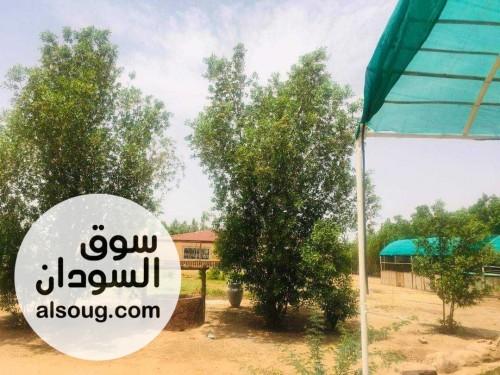 مزرعة مميزة استراحة واستثمار في الكدرو - صورة رقم