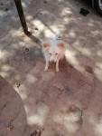 كلب لولي مطيع للانسان يتبرذ خارج المنزل اسمه جاس