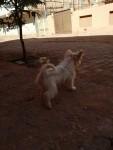 كلب لولي ضكر العمر ٣ شهر تقريبا ب ٦ ونصف