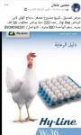 للبيع مشروع دواجن دجاج بياض hyline