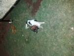 كلب لولي مهجن عمر شهرين تقريباً