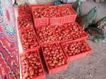 طماطم للبيع مباشر من المزرعه إلى المستهلك