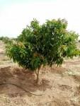 للبيع  مزرعة  في  شرق   النيل