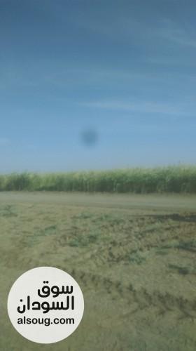 للجادين مزرعة 10 فدان جبل الاولياء - صورة رقم