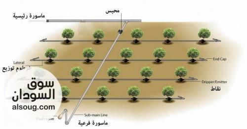شبكات الري الحديث نتقيط رشاشات - صورة رقم